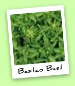 Basilico Basil