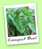 Compact Basil