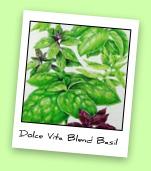 Dolce Vita Blend Basil