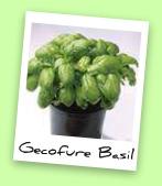 Gecofure Basil