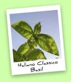 Italiano Classico Basil