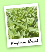 Key Lime Basil