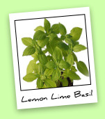 Lemon Lime Basil