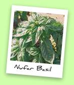 Nufar Basil
