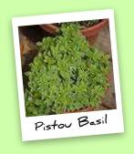 Pistou Basil