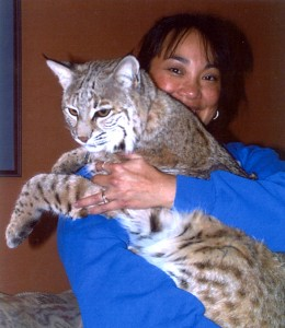 Ramona and Big Bobby my Bobcat