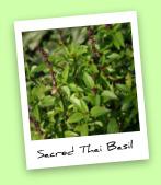 Sacred Thai Basil