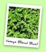Veseys Blend Basil
