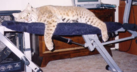 Workout Bobcat